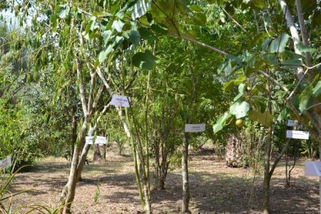 Agricultura e Emater realizam campanha de mudas da Afubra