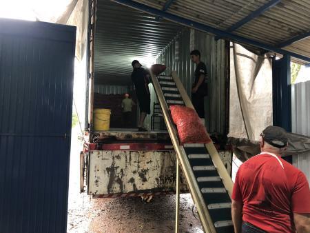 Em 2021, agricultor de noz-pecã de Taquari exportou 40 toneladas para mercado asiático e europeu