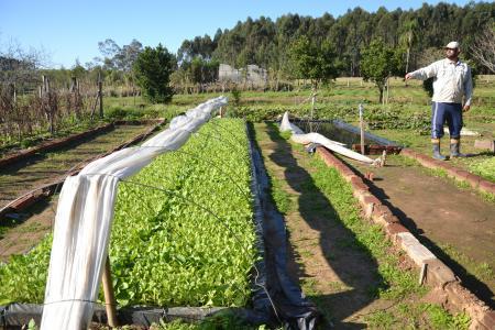 Faturamento do setor agrícola de Taquari chegou a quase R$ 90 milhões em 2020